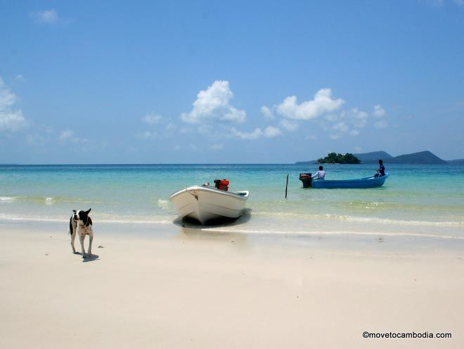 Koh Rong dogs