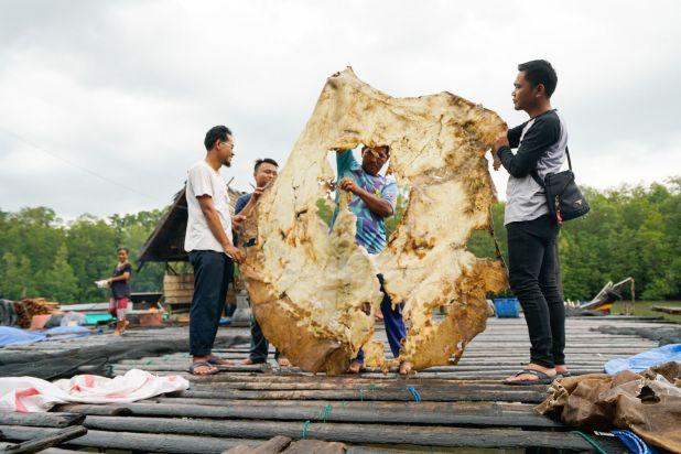 Los residentes de Bungin, una localidad pesquera de Sumatra Meridional, sostienen la piel seca de una ...