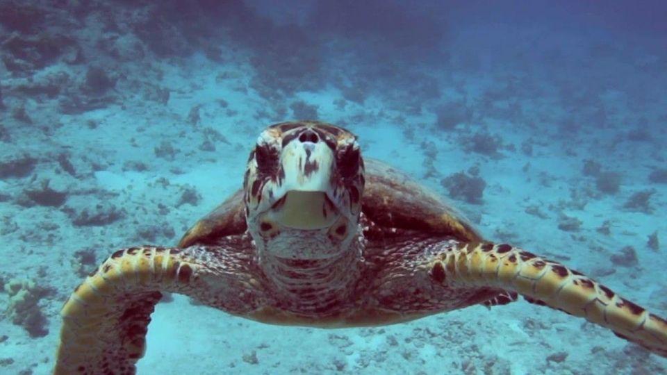 Dia Mundial dos Oceanos Tudo o que você precisa saber sobre os oceanos   National Geographic