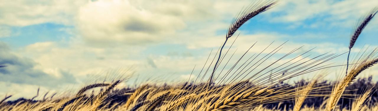 Resultado de imagem para Herbicide Is What's for Dinner
