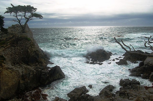 Lone Cypress at Pebble Beach
