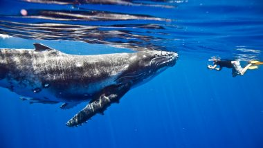 Mystery Whale Returns by Moving $35 Million — Miner Transfers 1,000 'Sleeping Bitcoins' from 2010