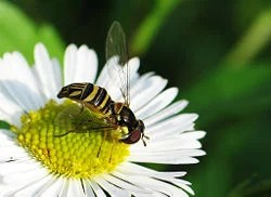 Pollination  New World Encyclopedia