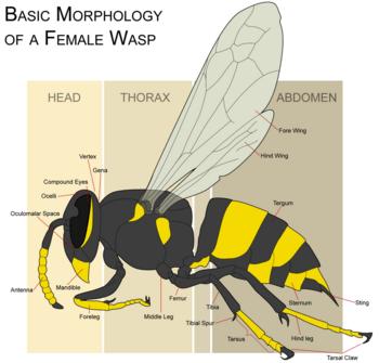 ant parts diagram msd 6al wiring chrysler wasp - new world encyclopedia