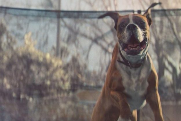 John Lewis' advert last year featured Buster the Boxer