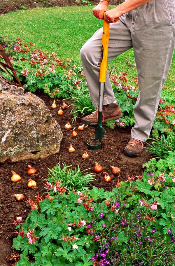 tips planting favorite