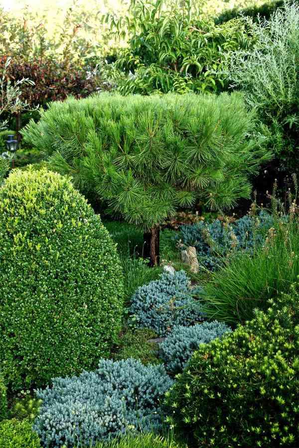 trees shrubs & vines