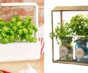 indoor herb gardens kits