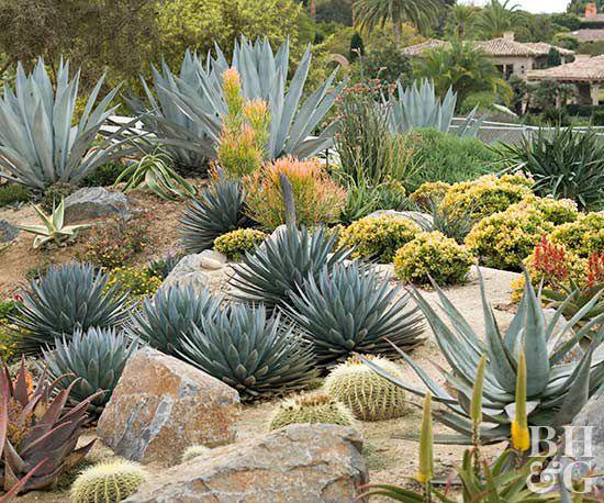 start cactus garden