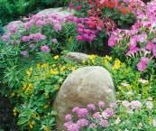 cottage garden pics