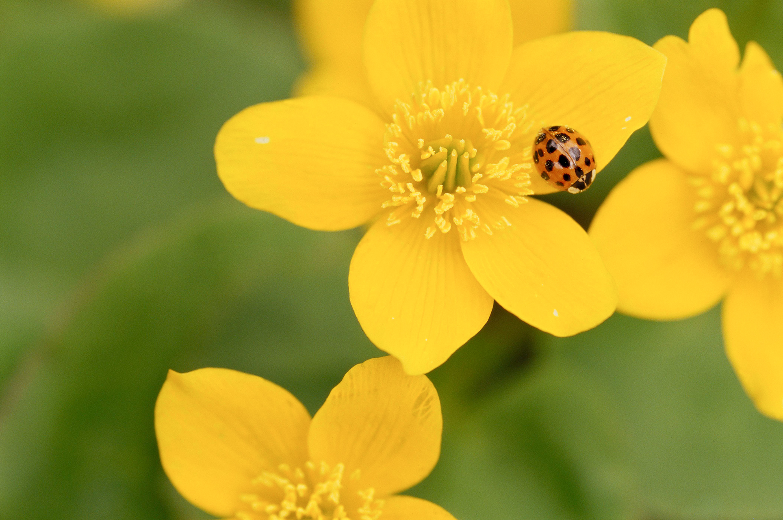 organic flower gardening better