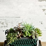 14 Creative Succulent Containers From Upcycled Thrift Store And Salvaged Finds Better Homes Gardens
