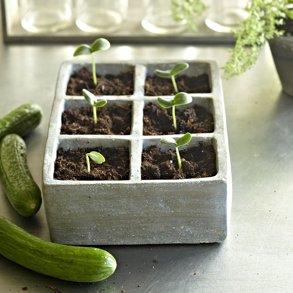 Easy Vegetables To Grow Eatingwell