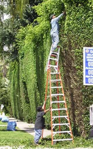 Ladder on Ladder