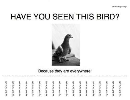Funny Sign - Have You Seen This Bird