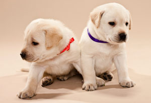 Cute Ribbons Wallpaper Sheltering Animals Of Abuse Victims Animal Abuse