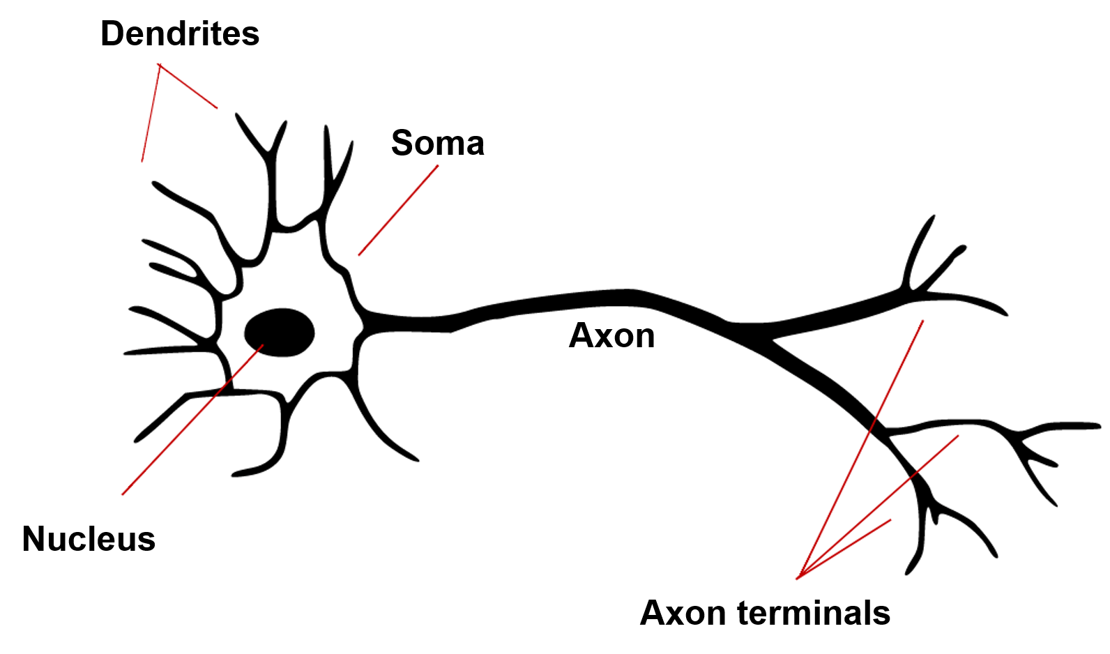 Understanding The Mcculloch Pitts Neuron