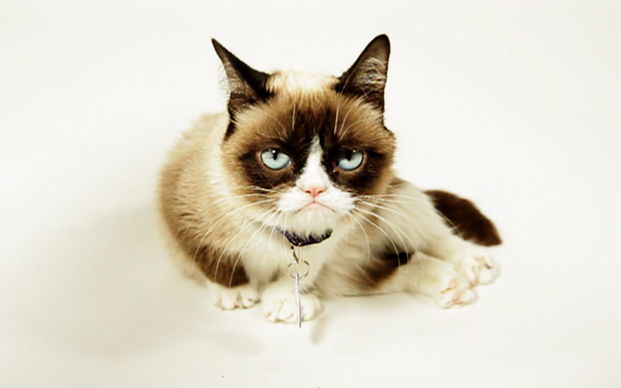 What Makes Grumpy Cat Happy?