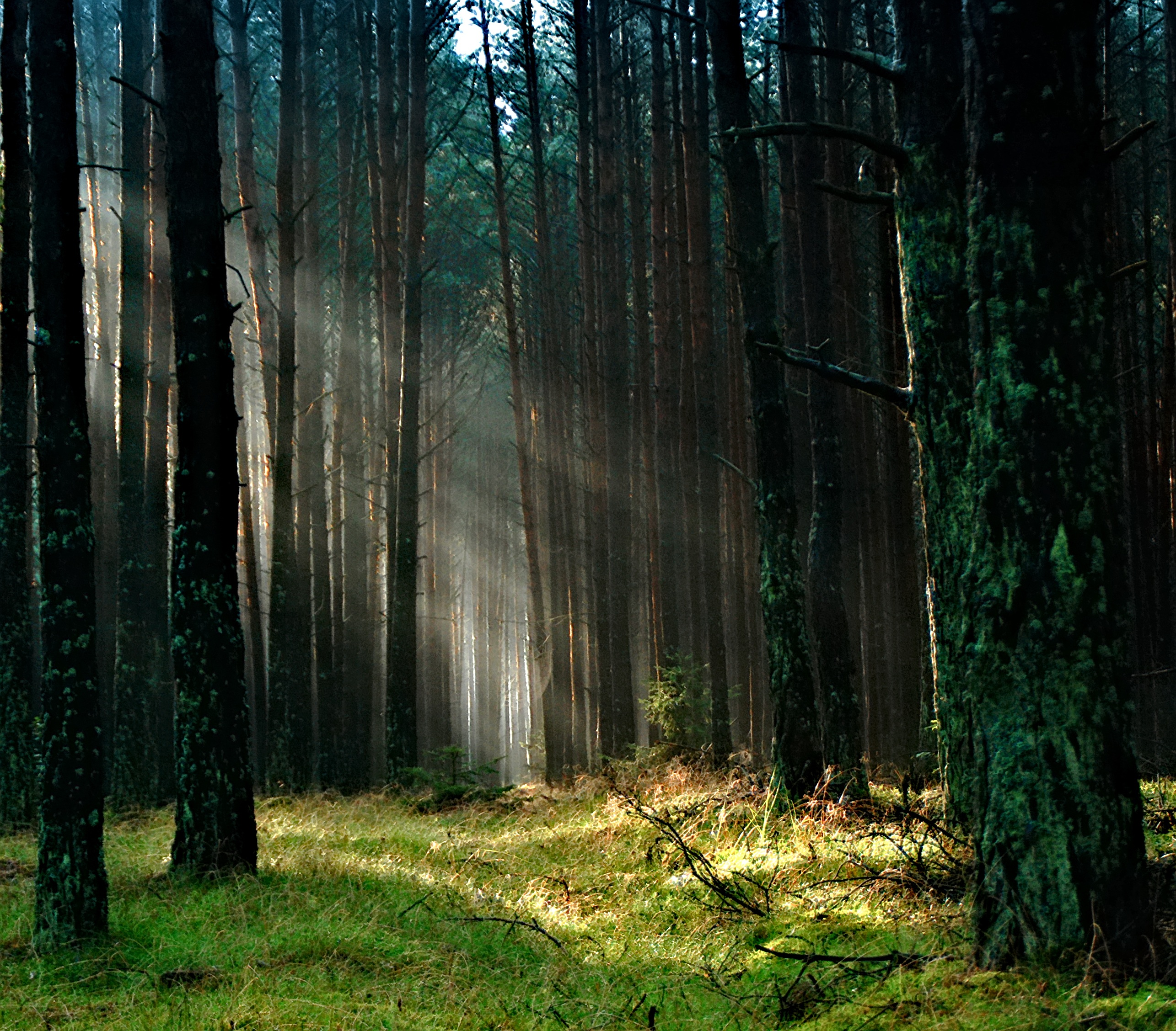 Forest With Sunlight · Free Stock Photo
