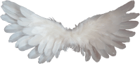 White Angel Wings Png | www.imgkid.com - The Image Kid Has It!