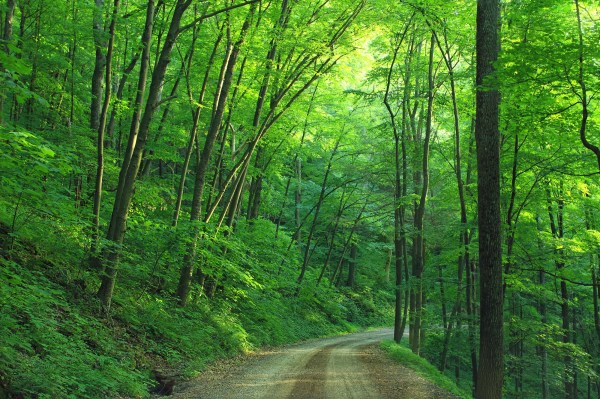 green tree roadway