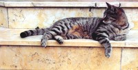 Grey Cat Lying in Marble Stairway  Free Stock Photo
