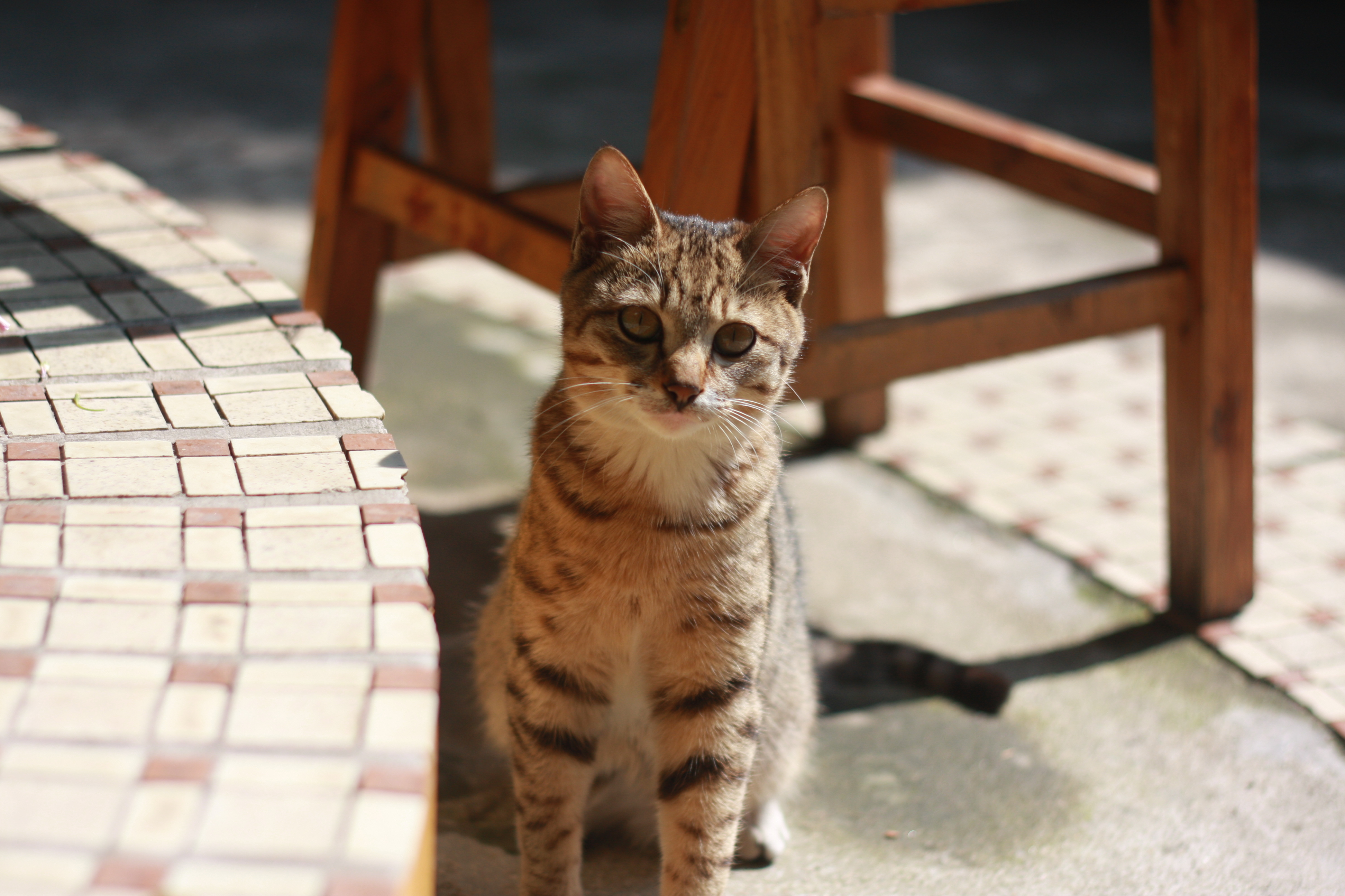 High Definition Animal Wallpapers Brown Tabby Cat Sitting On Concrete Floor During Daytime