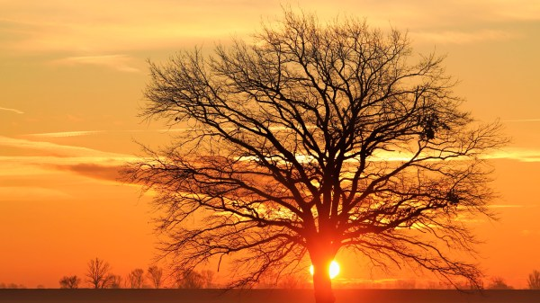 Tree Silhouette Sunset