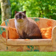 Orange Color Sofa Small Wrought Iron Table Himalayan Cat Sitting On Chair During Daytime ...