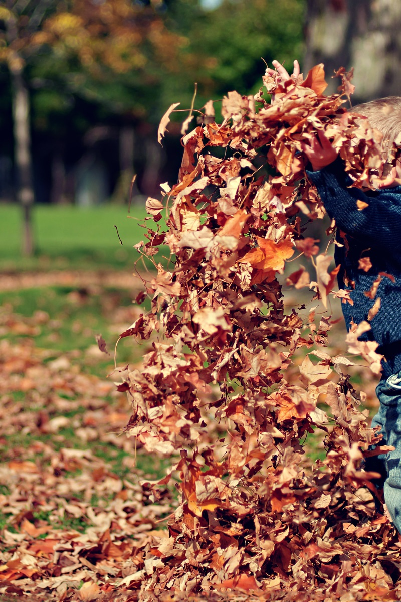 Fall Landscape Wallpaper Desktop Boy Playing With Fall Leaves Outdoors 183 Free Stock Photo