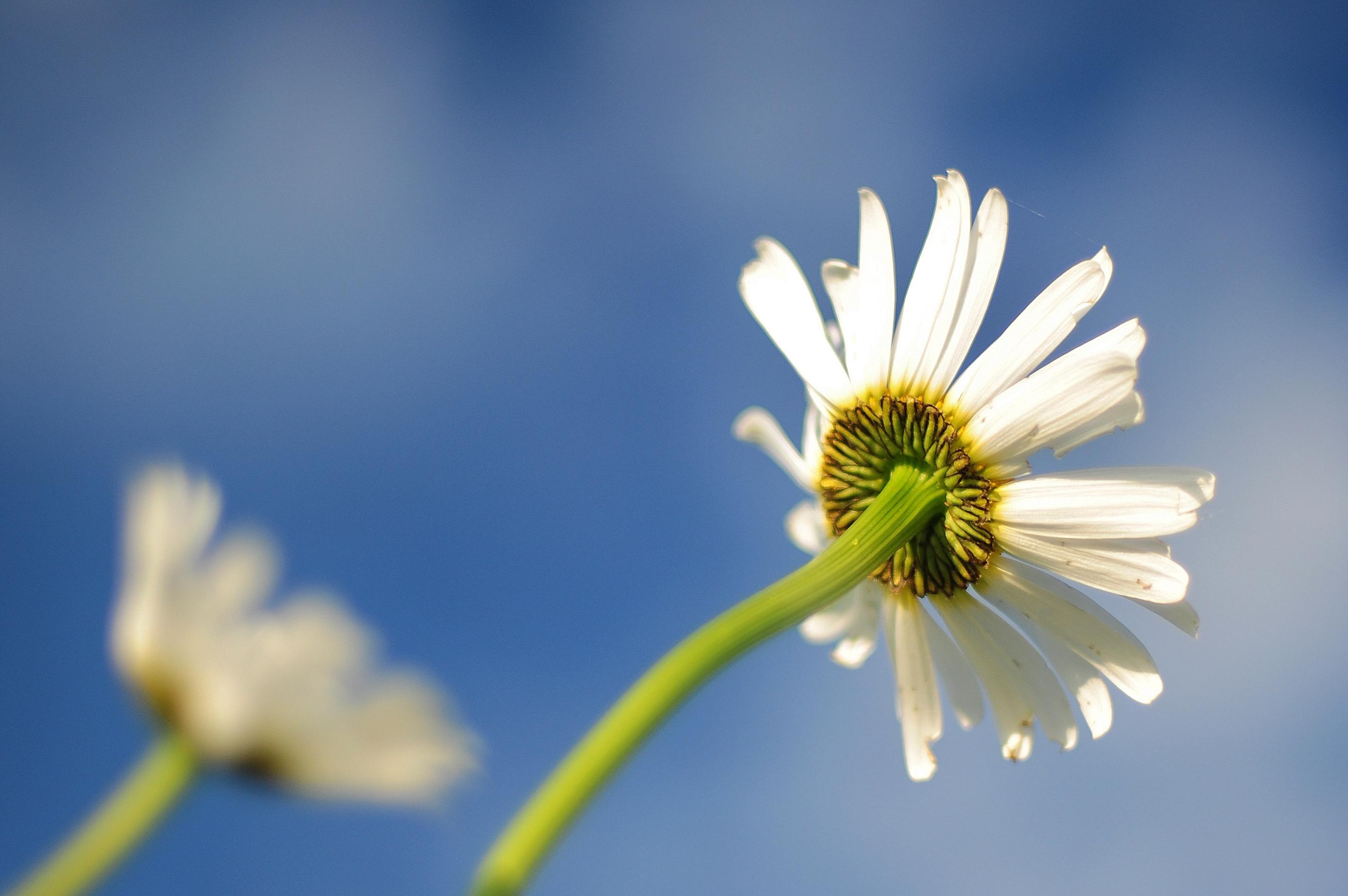 صور ورود بيضاء جميلة جدا  صور ورد ابيض  باقة منتقاة