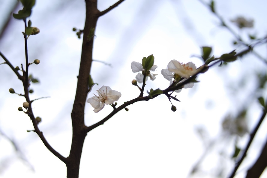 nature, flowers, branches