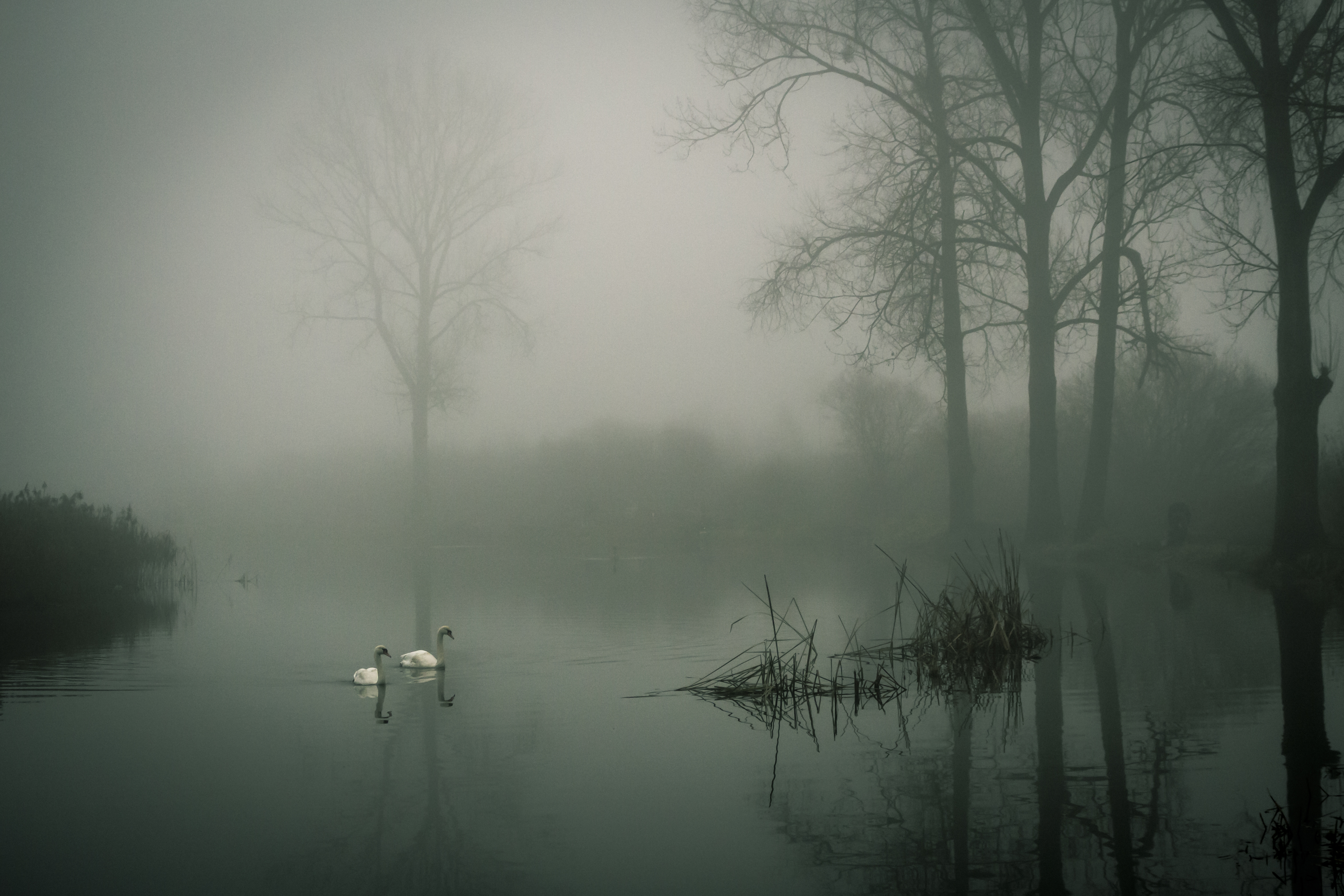 Minimalist Wallpaper Fall Photo Of Two White Ducks On Water During Fog 183 Free Stock