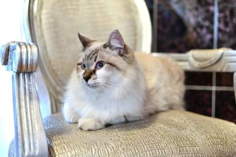 Risultati immagini per shaded cat