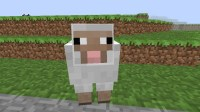 The story of Sally the Sad Sheep Minecraft Blog