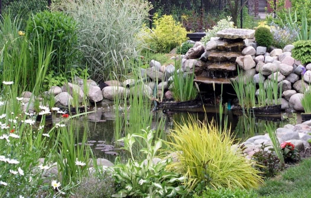 petits bassins de jardin comment les