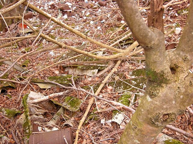 Strupena azbestna kritina, že nekoliko poraščena z mahom,  ter zarjavele pločevinke po vsej verjetnosti že dlje časa  onesnažujejo porozno kraško površje v gozdu blizu  mejnega  prehoda Lipica. Nanje so inšpekcijo opozorili okoljevarstveniki, vendar  se slednja odziva počasi.