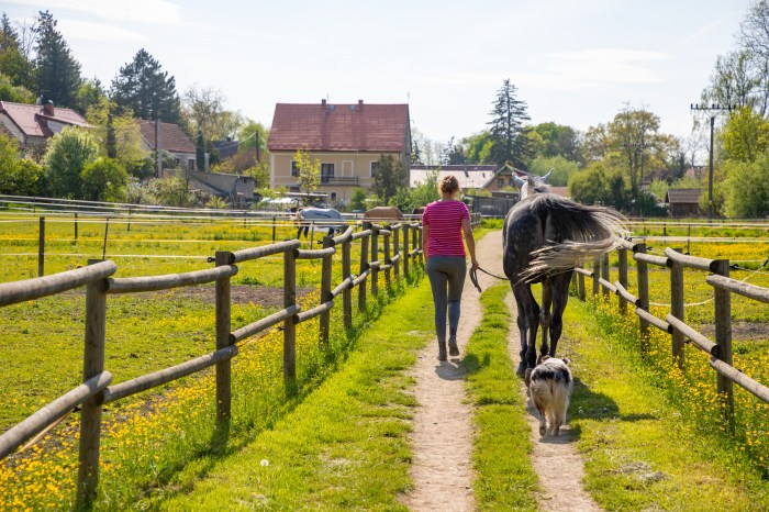 Beautiful countryside view with a horses animal in farm in deep countryside small town