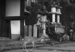 A visit to Nara
