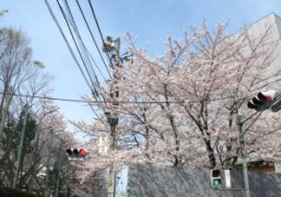 OLYMPIA in Japan: Aoyama on a sunny Monday afternoon. Photo Olympia Le-Tan