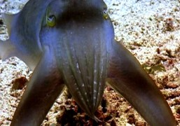 "Alex Bag TV Takeover / World's Deadliest – ""Sudden Death"" Cuttlefish"