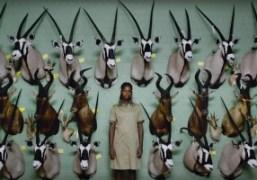 BFI Film Festival highlights: Safari Trailer