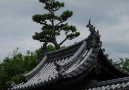 Trip to Nara by Chikashi Suzuki