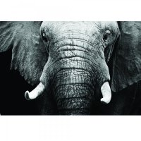Large Tempered Glass Elephant Artwork