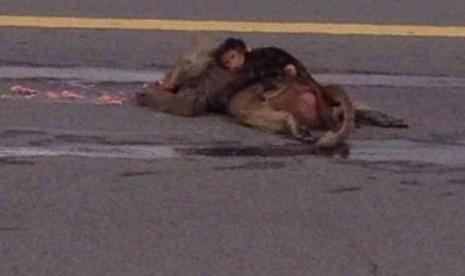 Monyet mungil itu tetap dekap bangkai induknya