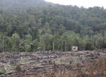 Staf Presiden: Menyesatkan, Ada Potensi Besar Hutan Hilang