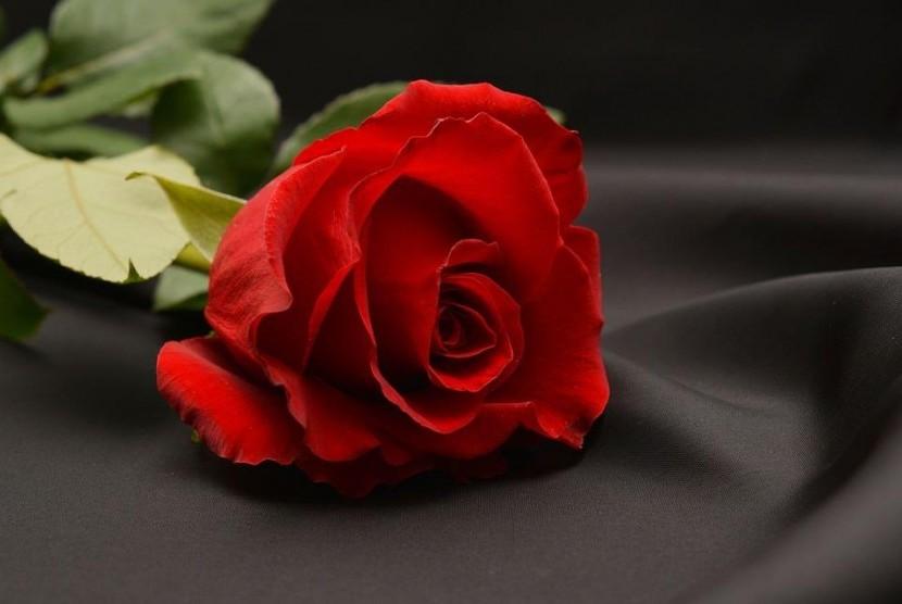 Bunga mawar menjadi simbol perdamaian dan persatuan yang diberikan Muslim di Inggris.