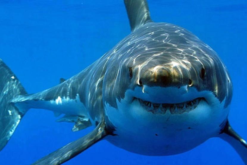 Nelayan NTB Tangkap 8006 Ikan Hiu  Republika Online