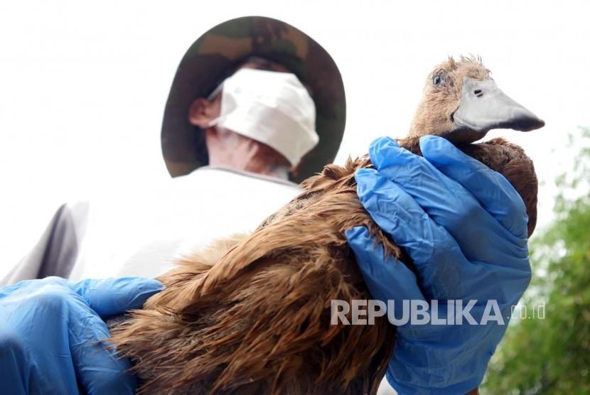 Penduduk memegang itik yang akan di vaksin flu burung oleh tim Dinas Pertanian Kabupaten Bandung, di Kampung Lebakwangi, Desa Sekarwangi, Kecamatan Soreang, Jumat (24/2).