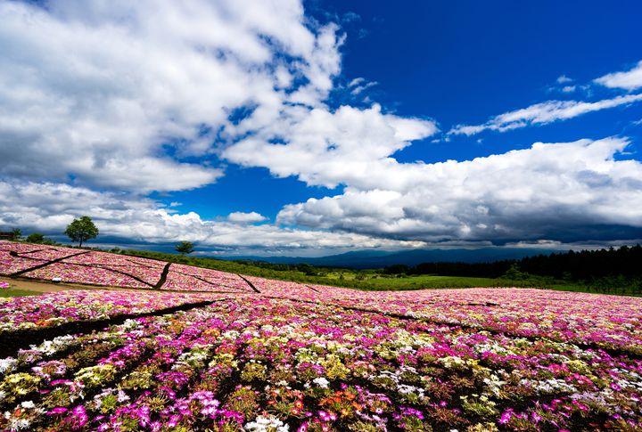"""自然溢れる大分県の誇る大高原。""""久住高原エリア""""でおすすめのスポット7選"""